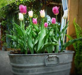 Sentinelles du printemps