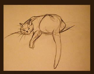 cat sketch by Sharsarannon