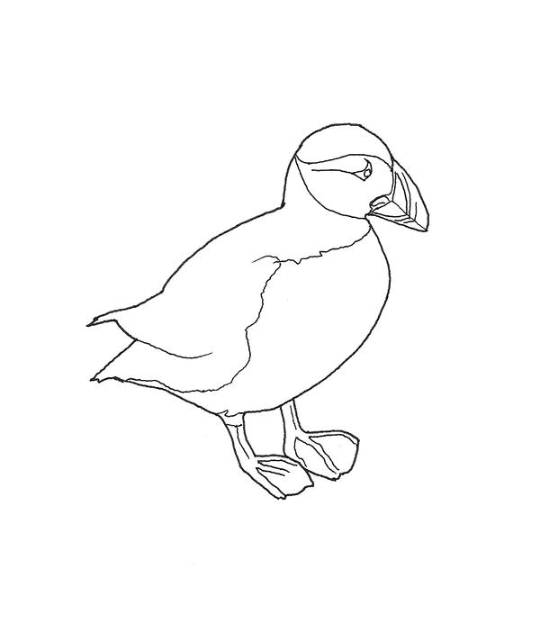 Puffin drawing for Puffin coloring pages to print