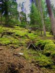 Moss climbs