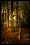Pale Sunlight HDR by TwiggyTeeluck