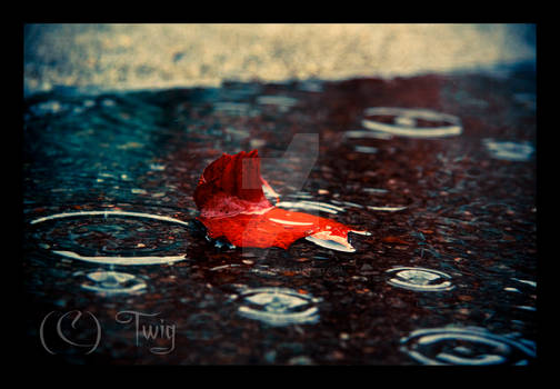 Alone with the Raindrops