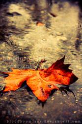 Autumn Showers by TwiggyTeeluck