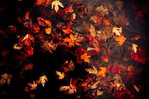 Leaves and Rain by TwiggyTeeluck