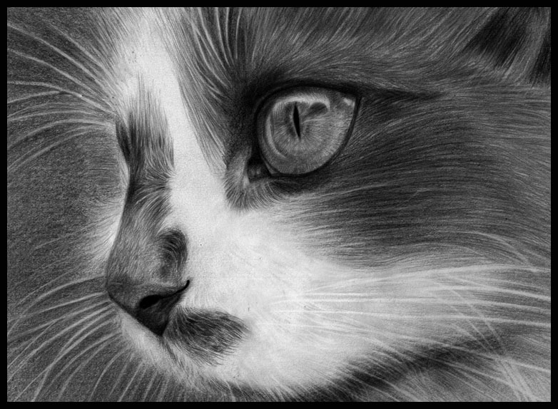 Eye of  the cat by RememberMeOne