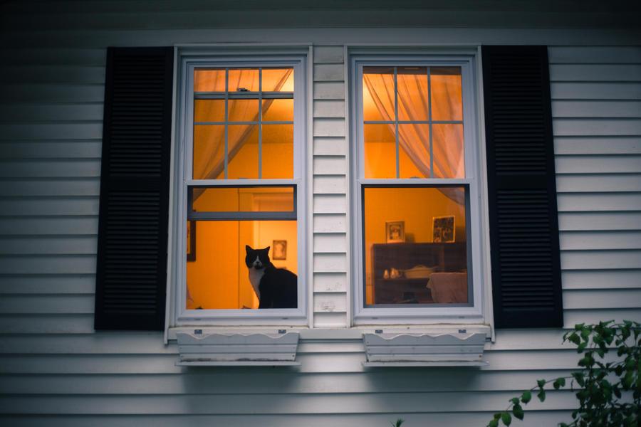 Window kitty by joannchilada
