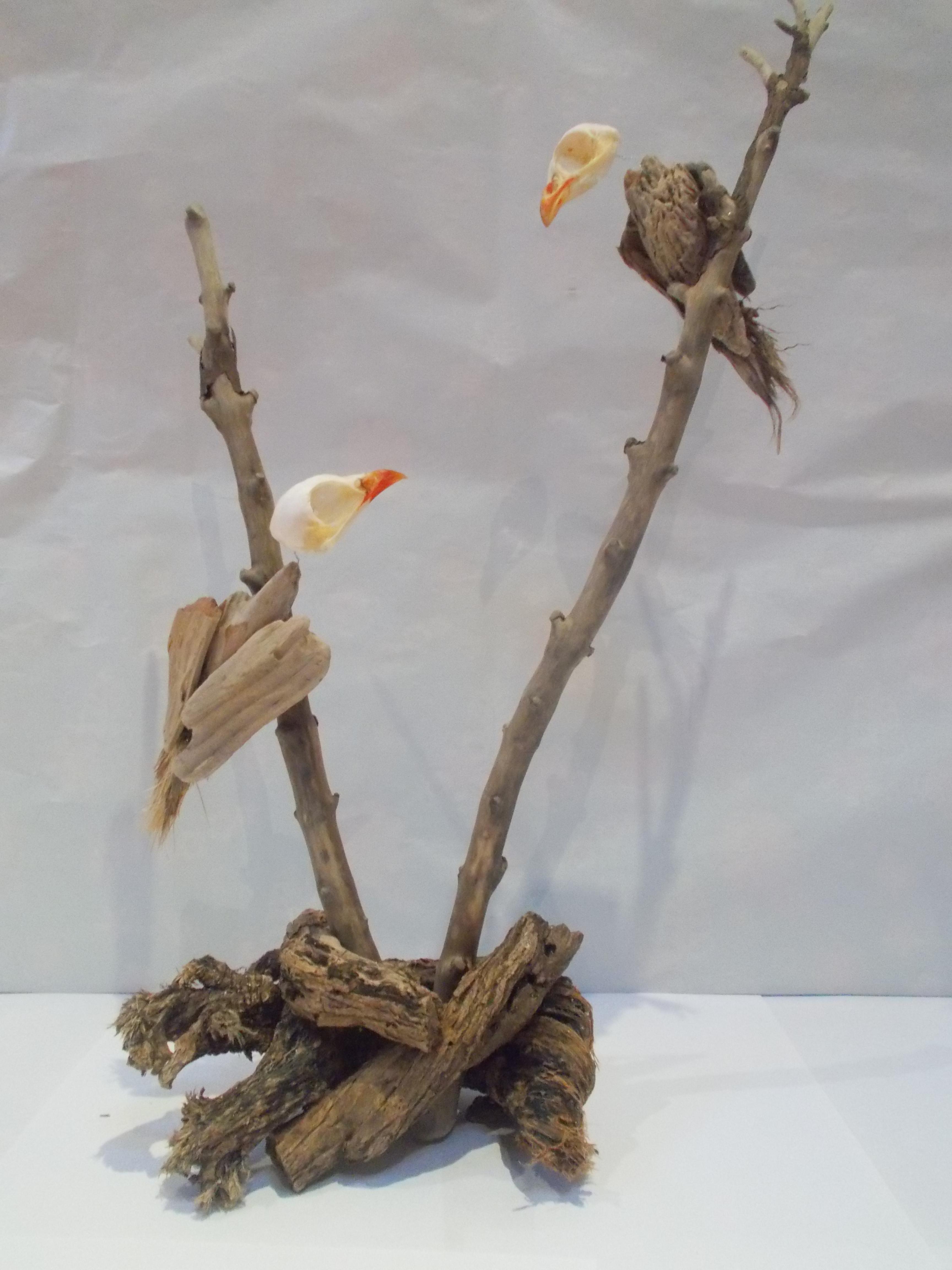 Love Birds by Befcat