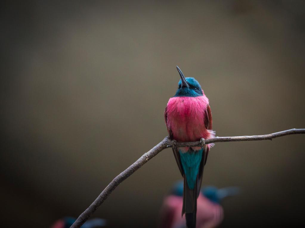 Colibri by Dobi78