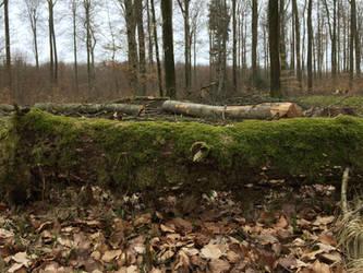 Tree Stock by Dobi78