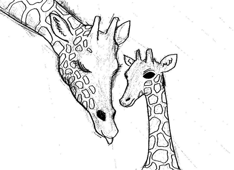 Cute Giraffe Wallpaper Tumblr