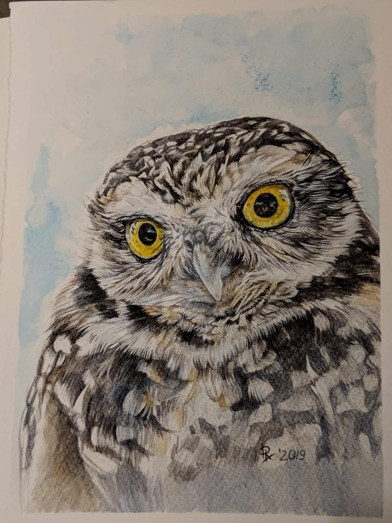 owl by ir-2
