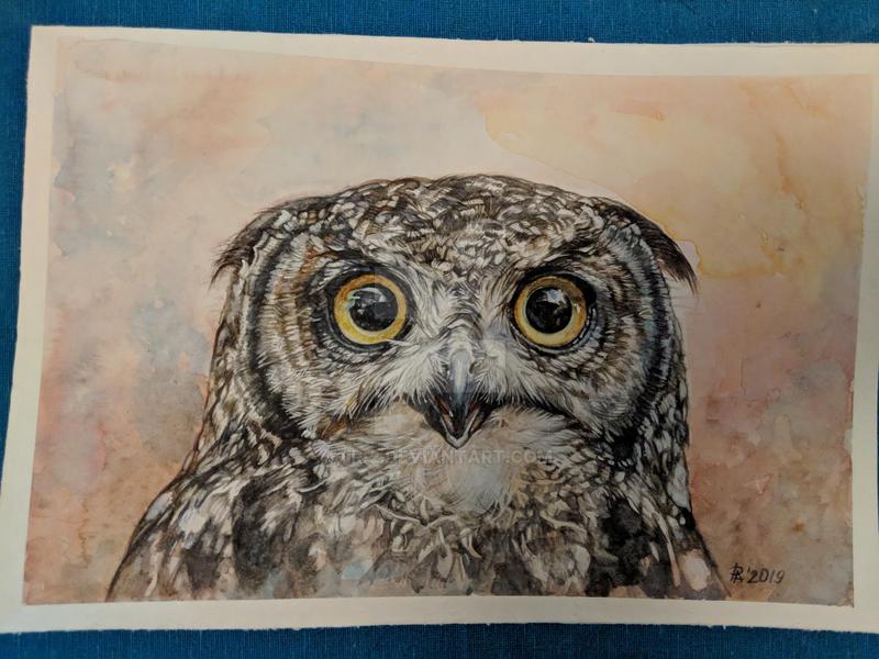 Curious owl by ir-2