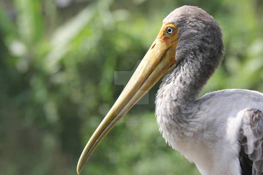 look at my beak