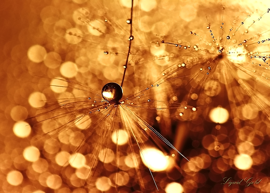 Liquid Gold by Sandy515