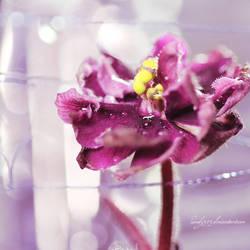 simple violet
