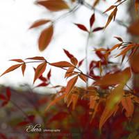 Spring - Not Autumn - by phoenixgraphixstudio