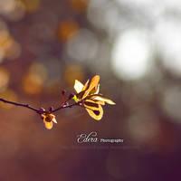 Dream On by phoenixgraphixstudio