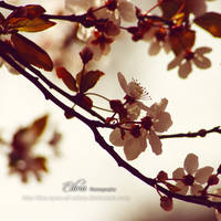Backlight Spring by phoenixgraphixstudio