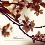 Backlight Spring