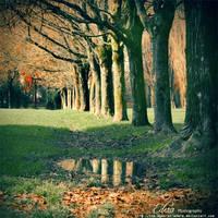 a u tu m n a l . . by phoenixgraphixstudio