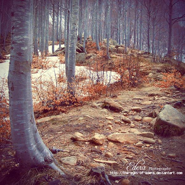 ..:: the path::.. by phoenixgraphixstudio