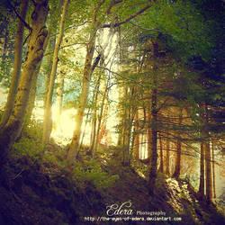 f o r e s t . . . by phoenixgraphixstudio