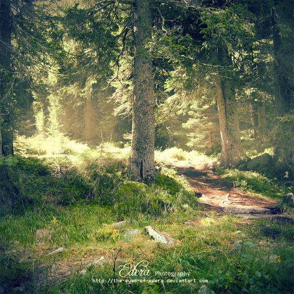 . . : : into the wild : : . . by phoenixgraphixstudio