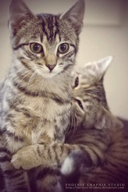 . . . ninja cats . . .
