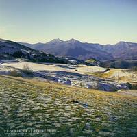 . . . violet hill . . .