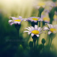 breathing some spring . . . by phoenixgraphixstudio