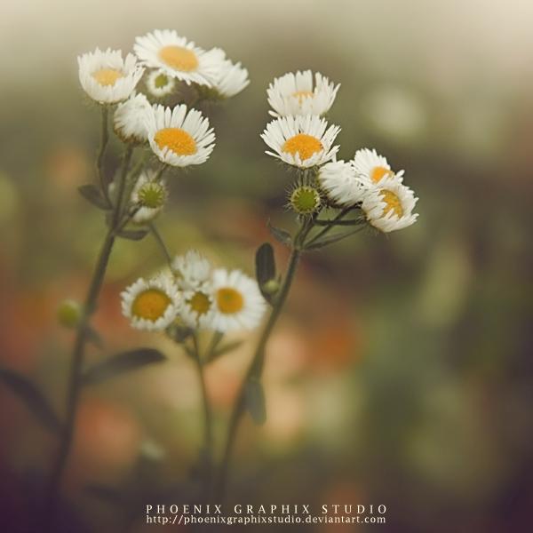 . . . lorem ipsum . . . by phoenixgraphixstudio