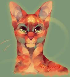 FirestaR by SkylaskA