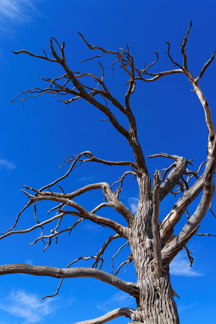 Dead Tree in The Flinders Ranges by destroyerofducks