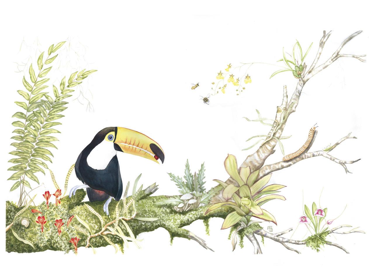 Bolivan biodiversity - watercolour by MasdevalliaJR