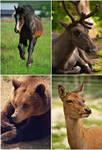 Animals by Erikor