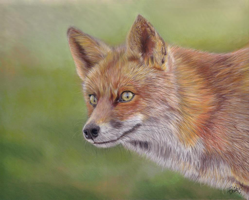 Fox by Erikor