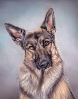 German shepherd by Erikor