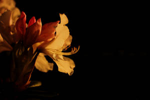 Fill The Dark With Flowers by kErstinR