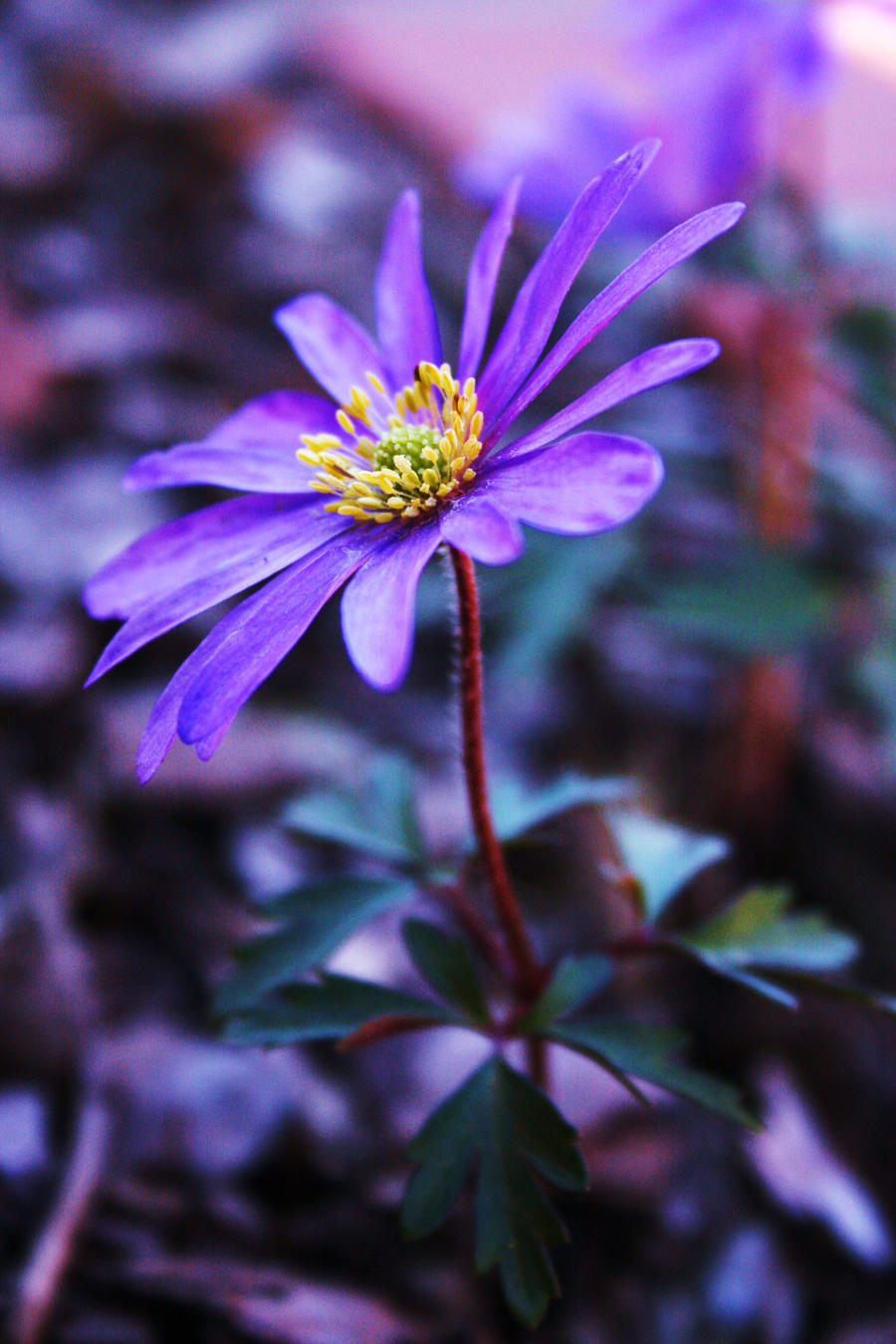 Simply A Small Flower by kErstinR