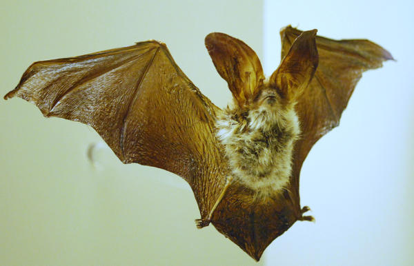 Bat Stock 3 by shortcakesnail-Stock