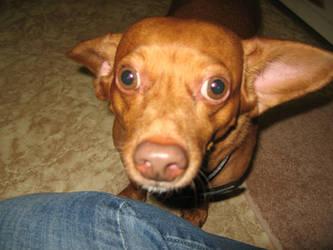 ugly dog by shortcakesnail-Stock