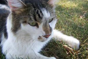.:Thunder My Cat:. by bobekite