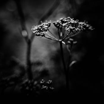 ..: Always - BW :.. by Mademoiselle-P