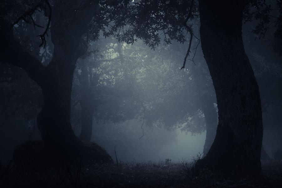 ..: Foggy day - Dark version :.. by Mademoiselle-P