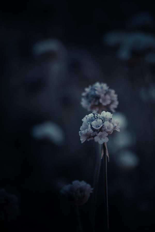 ..: Sweet memory :.. by Mademoiselle-P