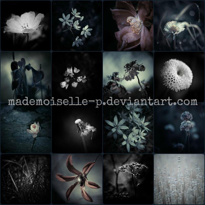 Mademoiselle-P's Profile Picture
