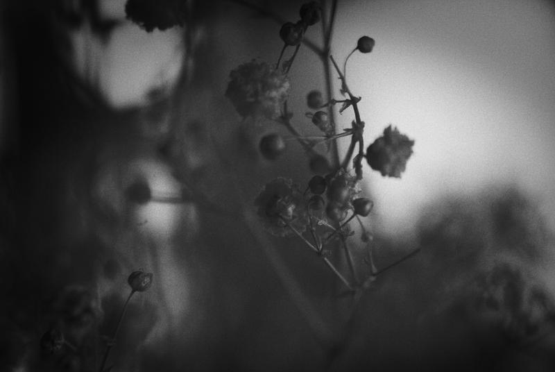 ..: February - Nature tres tres morte - II :.. by Mademoiselle-P