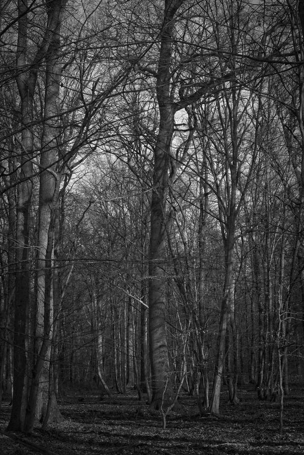 ..: March 2015 - A forest - I :.. by Mademoiselle-P