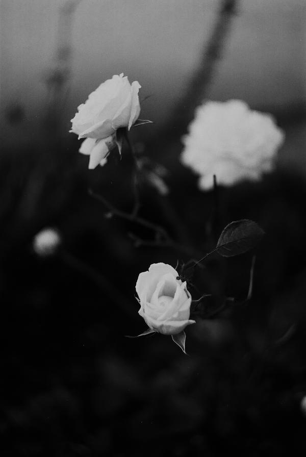 ..: Zenit E - Octobre 2015 - I I :.. by Mademoiselle-P