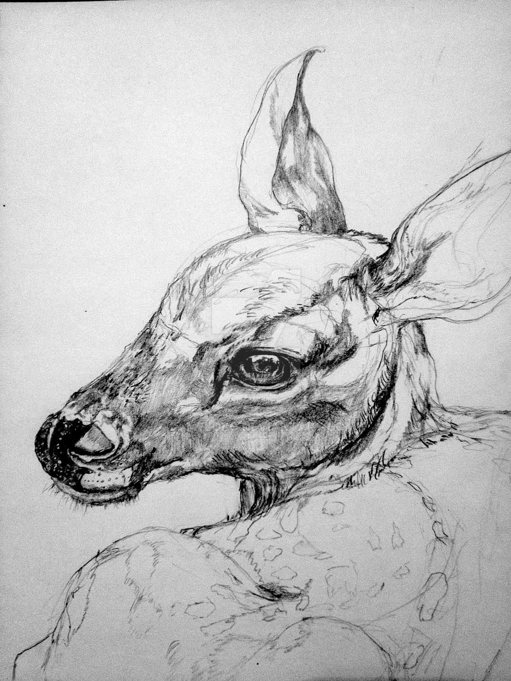 Fawn drawing WIP 3 by lamelobo